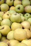 Green and yellow market apples Stock Image
