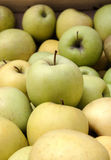 Green and yellow market apples Stock Images