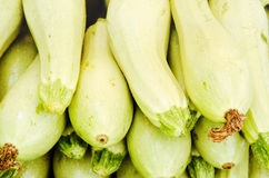 Green and yellow marrow squash Stock Photo