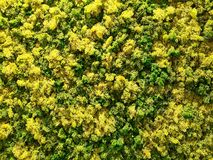 Green and Yellow moss Royalty Free Stock Photo