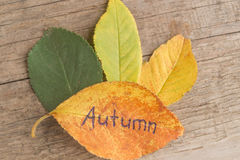 Green, yellow and orange leaves with inscription AUTUMN on the wooden background Royalty Free Stock Image