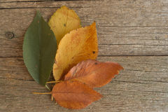 Green, yellow and orange leaves on the old wooden table. Autumn. Scene Stock Photos