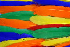 Motley joyful bird feathers. Green, yellow, orange, red and blue feathers. Background and texture. Motley background. Colored horizontal stripes. Festive Royalty Free Stock Photography
