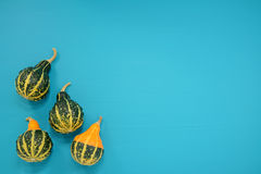 Green and yellow ornamental gourds on bright blue background Royalty Free Stock Photography
