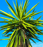 Green and yellow palm leaves on clear blue sky Stock Photo