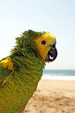 Green yellow parrot Stock Images