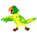 Green yellow parrot cartoon Royalty Free Stock Images