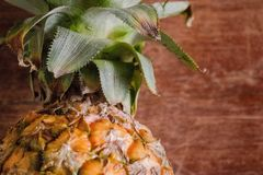 Green and Yellow Pineapple Royalty Free Stock Photos