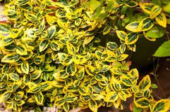 Green and yellow plant Stock Photography