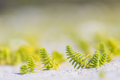 Green and yellow plants. In the sand Stock Photography