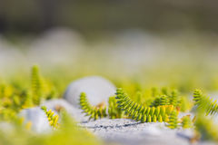 Green and yellow plants. In the sand Royalty Free Stock Photo