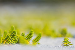 Green and yellow plants. In the sand Royalty Free Stock Image
