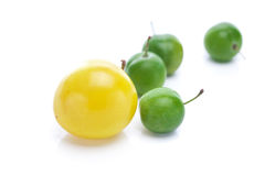 Green and yellow plums Stock Photography