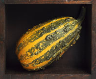 Green and yellow pumpkin inside a box. Green and yellow pumpkin inside a wooden box Royalty Free Stock Photo