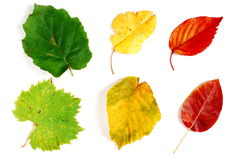 Green yellow and red autumn leaves Royalty Free Stock Photography