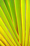 Green and yellow with red edges close-up Stock Photography