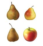 Green, yellow and red pears. Red and yellow apple. Stock Photo