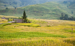 Green and yellow rice terraces with fog on mountain at Sa Pa, Vi Royalty Free Stock Images