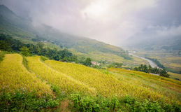 Green and yellow rice terraces with fog on mountain at Sa Pa, Vi Stock Photo