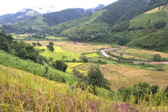 Green and yellow rice terraces Stock Image