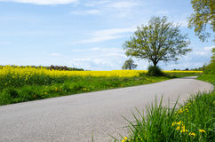 Green and yellow road Stock Images
