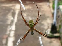 Green yellow spider Stock Image