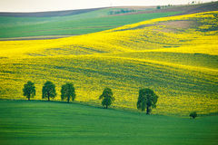 Green and yellow spring hills. Colza fields in Czech Moravia Royalty Free Stock Photography
