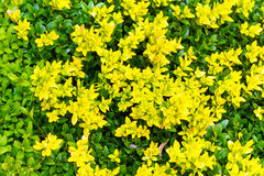 Green and yellow springtime colorfull leaves Stock Photo
