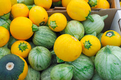 Green And Yellow Squash Stock Images