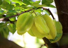Green and yellow star apple fruit carambola Stock Images