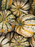 Green and yellow striped pumpkins Stock Images