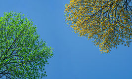 Green and yellow tree. Under blue sky Stock Photos