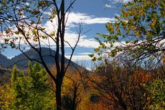 Green and Yellow Tree Tops. Stand in front of the mountain Stock Image