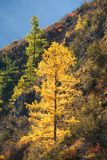 Green and yellow trees Stock Photography