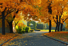 Green and yellow trees in park Royalty Free Stock Photography