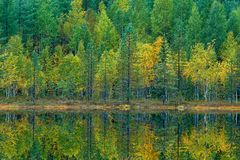 Green and yellow trees with reflection in the still water surface. Fall landscape with trees. Birch trees with pine trees in autum Stock Image
