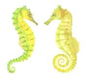 Green and yellow watercolor seahorses vector illustration