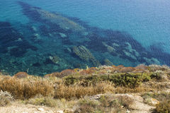 Green and yellow weed coast, crystal clear blue sea and rocks Stock Images