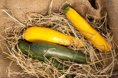 Green and yellow zucchini at the farm market.  Stock Photo