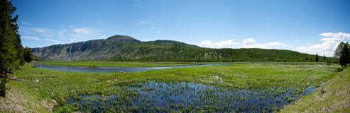 Green Yellowstone Wetlands Stock Photography