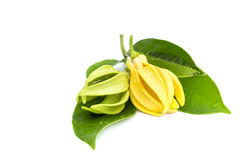 Green Ylang-Ylang flower on white background stock image