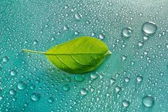 Green young Apple leaf and water drops on green background ecolo. Gy concept Stock Images