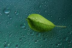 Green young Apple leaf and water drops on green background ecolo. Gy concept Stock Image