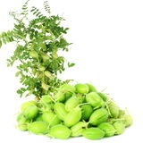 Green young chickpeas pod with plant  on pure white background Royalty Free Stock Photography
