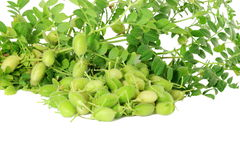 Green young chickpeas pod with plant  on pure white background Stock Photos