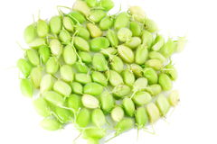Green young chickpeas pod on pure white background Royalty Free Stock Photos