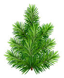 Green young Christmas tree isolated on white background. Illustration in vector format Royalty Free Stock Images