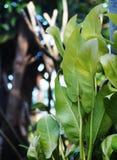 Green young creeping plant Stock Photos