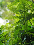 Green young creeping plant Royalty Free Stock Photos