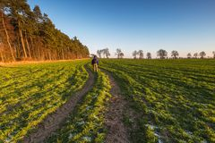 Green young field landscape with one man Stock Images